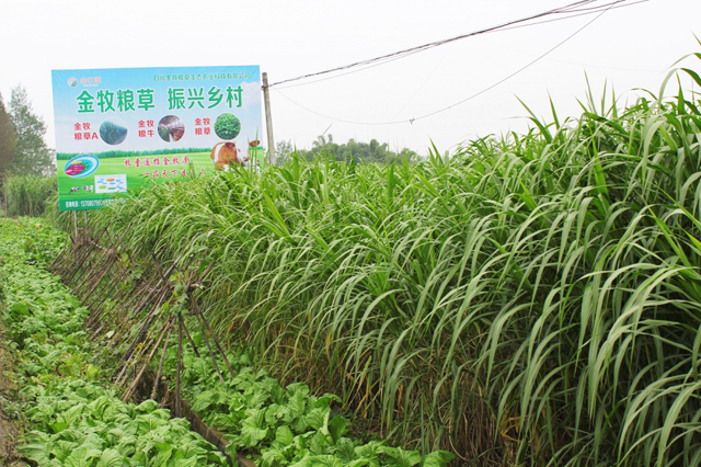 金牧粮草发源地大邑金鸡村迎来成都食品流通行业溯源食材年会